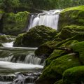 river flowing through mossy forest